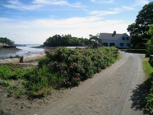 rose bushes on driveway over looking ocean