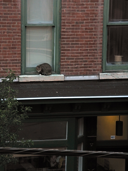 cat outside a window, one floor up