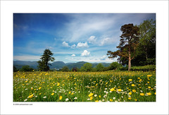 England in Springtime (Ian Bramham) Tags: england daisies landscape countryside photo spring nikon meadow sigma cumbria wildflowers 1020 daisys buttercups d40 ianbramham