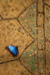 Butterfly world opening (10)