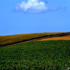 Rural Landscape with Poppies (Osvaldo_Zoom) Tags: italy cloud green composition rural landscape poppies marche artofimages bestcapturesaoi windowdesktop2010