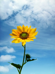 Where flowers bloom so does hope ( Rizwan Mithawala) Tags: light sky sun india flower clouds hope interesting flora poetry fantasy fantasia sunflower mumbai favourite comments khalilgibran gibran khalil rizwan rizwanmithawala mithawala