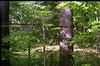 (drl.) Tags: tree fence maple whiteplasticchair whiteplasticchairs purged purge179