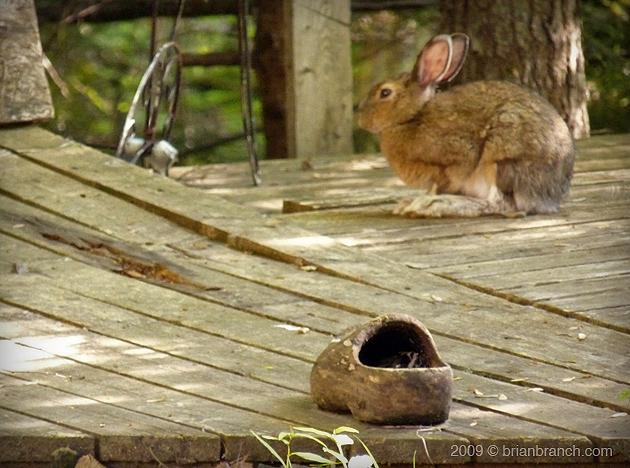 P1020159_hare