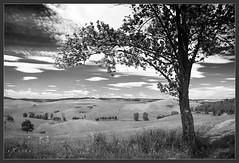 -- (exvivo) Tags: summer nature landscape blackwhite hungary aggtelek