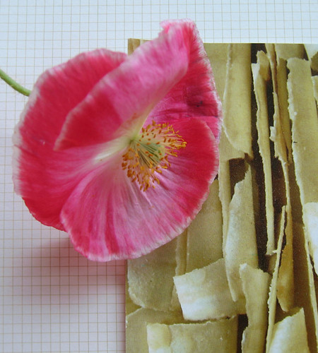 Farmer's market poppy on graph paper