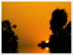 NATURE TALKS (DEVENDRA PAL(AWAY)) Tags: trees sunset red orange sun india black art beach nature water yellow photography shot riverside bokeh awesome creative silhouettes award images civilization pal masterpiece summers flowe devendra doubledragon dpal paololivornosfriends devendrapal