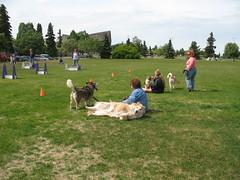 Watching Fly Ball Demo (Alaska Jellyfish) Tags: dogdayafternoon scoopthepoop