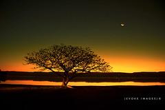 :: Glow :: (evoke images) Tags: longexposure sunset sky sun moon lake tree water night geotagged glow australia nsw newsouthwales windang