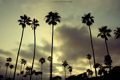 california (ShanLuPhoto) Tags: california travel sky usa cloud america palms losangeles newportbeach sihouette