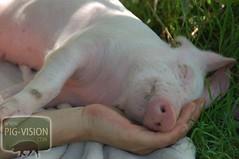 Gut beschützt schläft sich's einfach besser