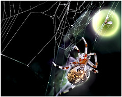 Spider (mastino0100) Tags: light photoshop insect spider colorful colorart mblik macroart naturecreation