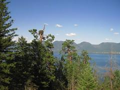 Osprey nest (calamity_sal) Tags: montana flatheadlake rockypoint ospreynest