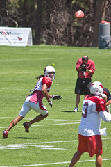 Cardinals Training Camp