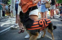 '91 Dog (Joe Shlabotnik) Tags: dog 1999 princeton reunions prade may1999 reunions1999