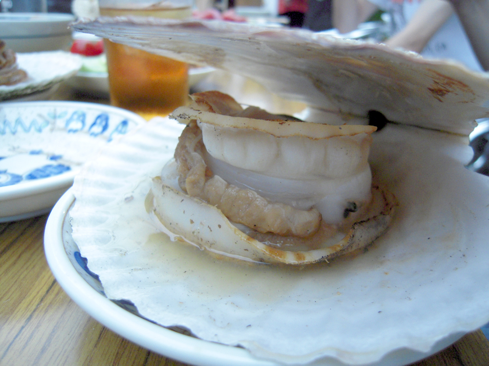 Worlds Biggest Scallop