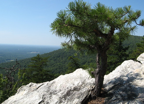 Tree grows out of the rock