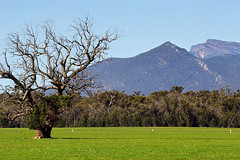 The Grampians, Victoria, Australia IMG_6538_The_Grampians (Darren Stones Visual Communications) Tags: mountain tree darren rural stones australia grampians victoria vic dgstones