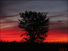 (Sarah-Vie) Tags: sunset tree arbres arbre coucherdesoleil