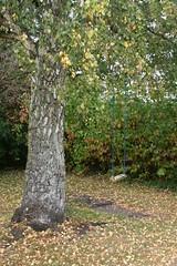 Swing (Alda Kalda) Tags: climatechange ecovillage dyssekilde think2