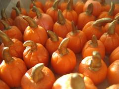 pumpkin patch (breannev) Tags: halloween pumpkin marzipan