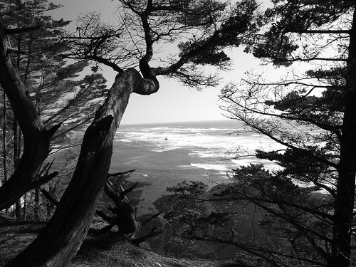 fitzgerald marine preserve