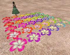 Petals (2009-10-10) *48b