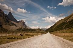 straight ahead (claudio.audisio) Tags: panorama mountain nature landscape nikon natura nikkor montagna valledaosta d90 1685 valveny