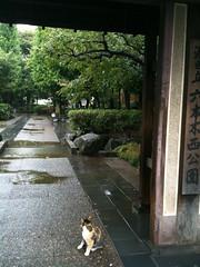 ネコが雨宿り