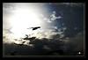 dove (Pete Mandin™) Tags: nikon dove gb rays sunrays doha qatar heavensgate d300 inspiredbylove d80 kalapati nikond300 philippinephotographicsociety dohapinoyshootersclub garbongbisaya gpnq pedr0pabl0
