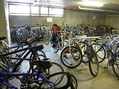 Radish in the bikecage at work (McMok) Tags: radish xtracycle peapodlt