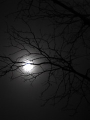 Blue Moon (Sally E J Hunter) Tags: moon night blackwhite branch noiretblanc fullmoon bluemoon winterbranches