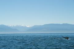 Whale (Christine=Mark) Tags: whale animals ocean mammals natuer