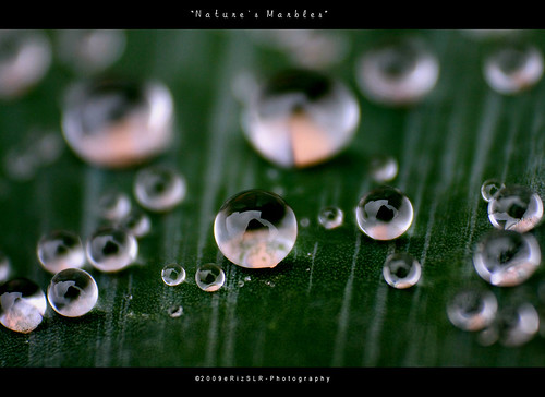 Nature's Marbles