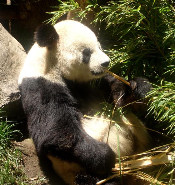 zoo1 copy