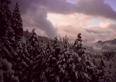 Backyard Wonder 1 (HeathMcConnell) Tags: snow clouds forest landscape outdoors photography oakridge watermarked 1x15