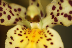 Gaze into the orchid's mouth