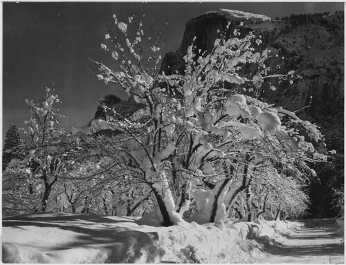 Half Dome, Apple Orchard, Yosemite, California, April 1933