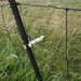 Detail of electric fence