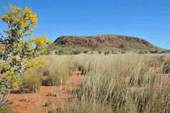 Near Marble Bar (The Grateful Dad) Tags: westernaustralia pilbara outbackaustralia marblebar