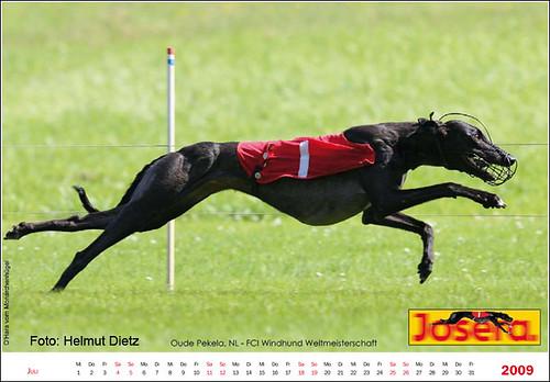Greyhounds-Juli