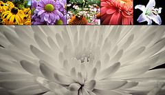 Flower Photos by Flower Power featured on the DIFF