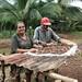 Sra. Rita Sandoval y el Sr. Faustino Vazquez secando frijoles rojos, Comunidad El Asentamiento, Kukra Hill, Nicaragua, Julio 09 091