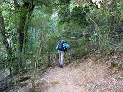Sur la trace de montée vers Bocca Laggera : la 1ère partie en sous-bois