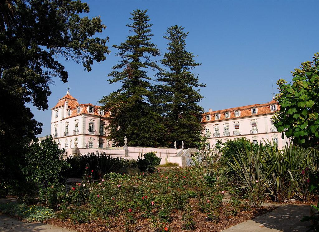 Araucárias - Palácio Pombal - Oeiras
