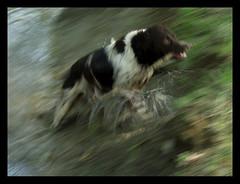 Speed (Dushan B. Hadnadjev [slowly back]) Tags: life time soul dushan
