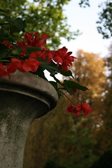 IMG_3446 (mybelle1969) Tags: paris urn garden luxembourg