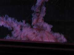 Newport Aquarium 172 (foodbyfax) Tags: newportaquarium