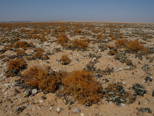 Lichens, Skeleton Coast, Namibia