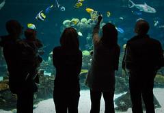 Pointing (A Fresh Perspective | Zak Metz) Tags: minnesota silhouette photography zoo aquarium perspective fresh llc mn minn saltwater southeastern minnesotazoo canonefs1022mmf3545usm a zakmetz canoneos40d wwwafpphotographycom 5073849069